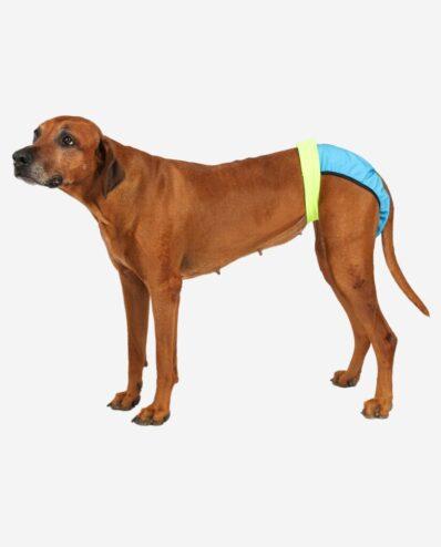 Läufigkeitshose für Hunde