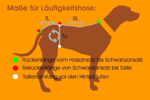 Maßfigurine Hund für Läufigkeitshose vermessen für RR DOG`s WARE Hundebekleidung