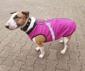 Bullterrier Hundemantel Softshell wasserdicht Pinkbeere RR DOG`s WARE Hundebekleidung nach Maß