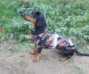 Dackel Teckel Hundemantel Softshell wasserdicht Camouflage RR DOG`s WARE Hundebekleidung nach Maß