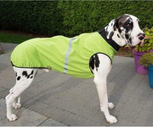 Deutsche Dogge Hundemantel Softshell wasserdicht Hellgrün RR DOG`s WARE Hundebekleidung nach Maß
