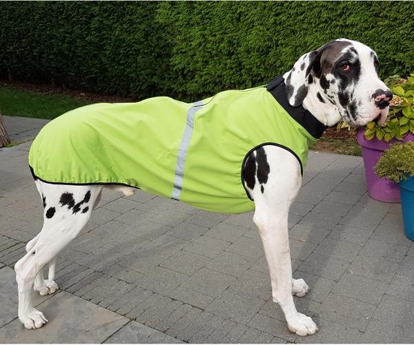 Dogge Softshell Grün