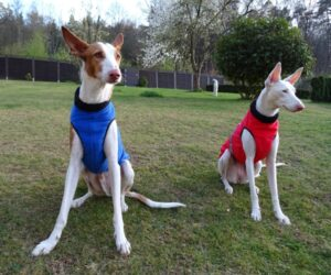 Galgo Hundemantel Fleece Blau Und Rot RR DOG`s WARE