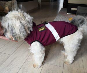 Havaneser Hundemantel Softshell wasserdicht Berry RR DOG`s WARE Hundebekleidung nach Maß