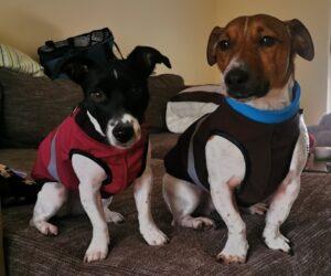 Jack Russel Terrier Hundemantel Softshell wasserdicht Rot und Braun RR DOG`s WARE Hundebekleidung nach Maß