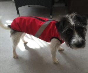 Kleiner Mischlingshund Hundemantel Softshell wasserdicht Rot RR DOG`s WARE Hundebekleidung nach Maß