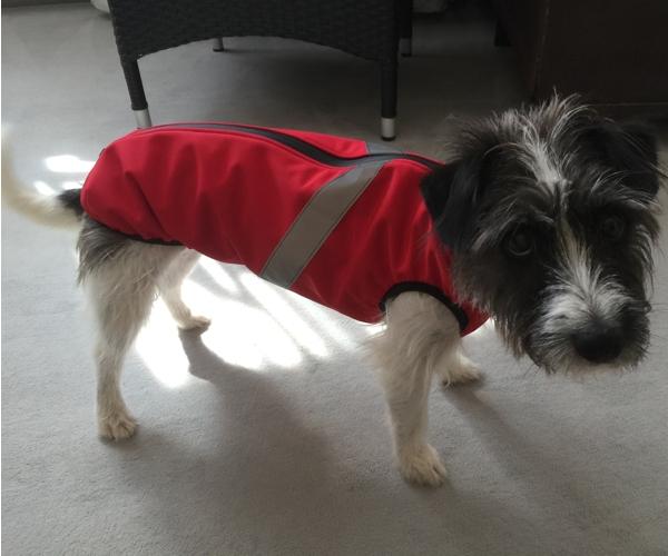 Kleiner Hund Softshell
