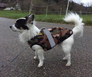 Kleiner Hund Hundemantel Softshell wasserdicht Camouflage RR DOG`s WARE