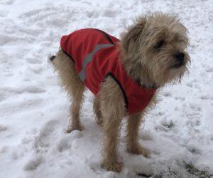 Mischlingshund Hundemantel Softshell wasserdicht Rot RR DOG`s WARE