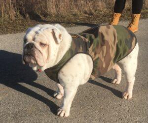 Großer stämmiger Molosser Hundemantel wasserdicht EXTREME Camouflage RR DOG`s WARE