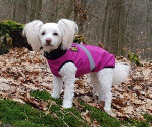 Papillon Hundemantel Softshell wasserdicht Pinkbeere RR DOG`s WARE