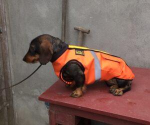 Rauhhaardackel Hundemantel Cordura Jagdschutzweste orange RR DOG`s WARE