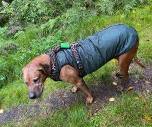 Rhodesian Ridgeback Hunderegenjacke strapazierfähig wasserdicht Khakigrün RR DOG`s WARE