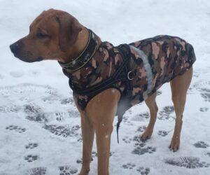 Rhodesian Rigdeback Hundemantel Softshell Camouflage mit Geschirr RR DOG`s WARE