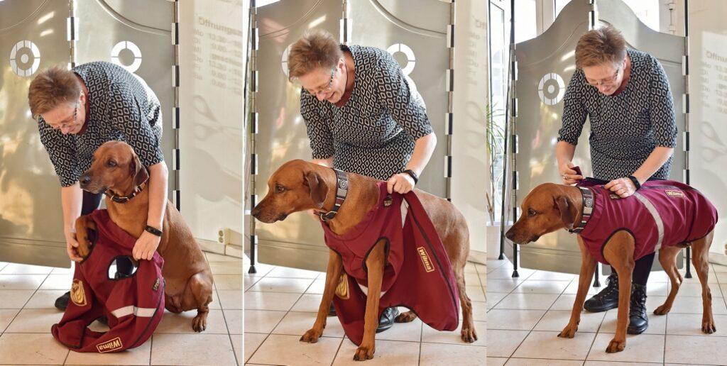 RR DOG`s WARE® WARE Bodywarmer Softshell anziehen