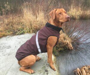 Rhodesian Ridgeback Livernose Hundemantel Softshell Braun RR DOG`s WARE