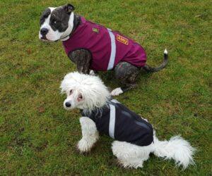 Stafforshire Terrier und Chinesischer Schopfhund Hundemantel Softshell RR DOG`s WARE