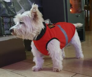 Westhighland Terrier Hundemantel Softshell Signalorange RR DOG`s WARE