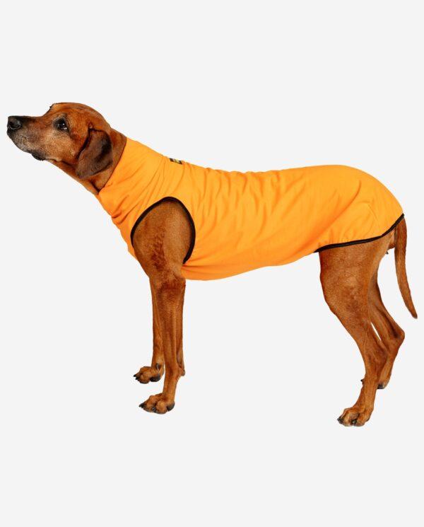 Hundepullover Sweat Orange RR DOG`s WARE